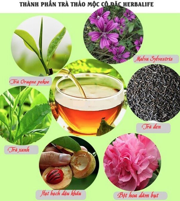 thanh phan tra thao moc herbalife